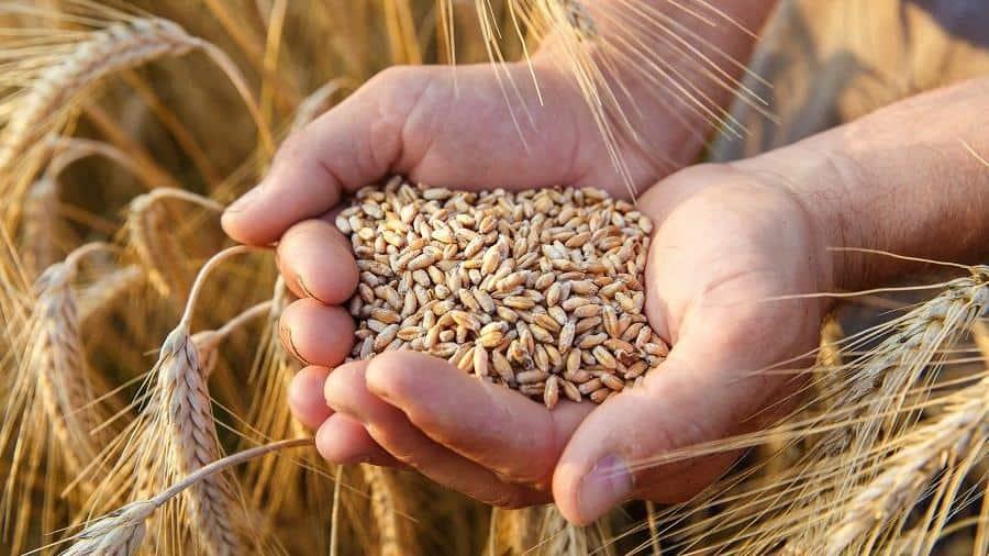 Rüyada Buğday Satıcısı Görmek